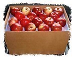 Honeycrisp Apple Bushel Case Jumbo 36-56 Count (risk of bruising)