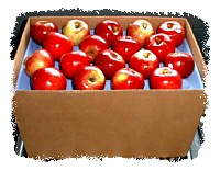 McIntosh Apple 100 Count Bushel <BR> (risk of bruising)