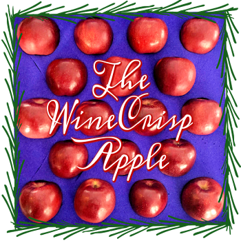 The WineCrisp Apple