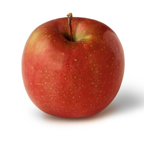 Fuji Apple Bushel Case 100 Count <BR> (risk of bruising)